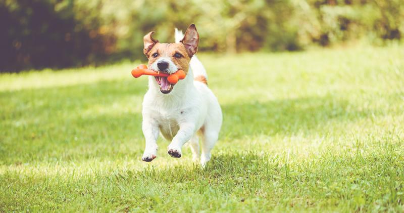 Why Do Dogs Bury Their Bones?